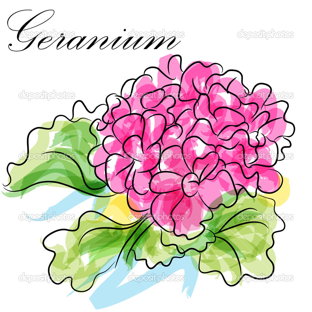 An image of a pink geranium flower. — Stock Vector #11576986