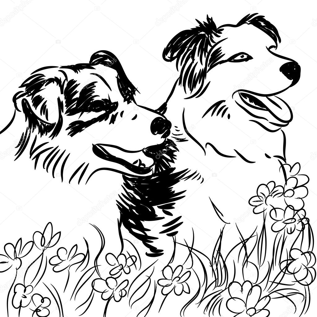 free coloring pages of border collies download