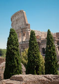 Colosseum view from forum — Stock Photo