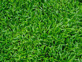 Soccer ball on green grass — Stock Photo