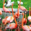 Stock Photo: Flamingo in Miami zoo