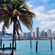 Miami city tropical view — Stock Photo