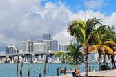 Miami city tropical view — Stock Photo