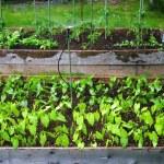 Watering an Urban Garden — Stock Photo #11344824