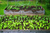Watering an Urban Garden — Stock Photo