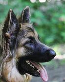 Dog on the individual training — Stock Photo