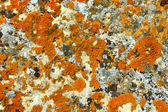 Stone texture with lichen — Stock Photo