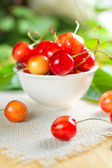 Wet sweet cherry on the white bowl and green leaves — Stock Photo