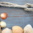 Shells and marine rope on a wooden board — Stock Photo