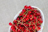 Red currant on the white bowl — Stock Photo