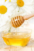 Honey. — Stockfoto