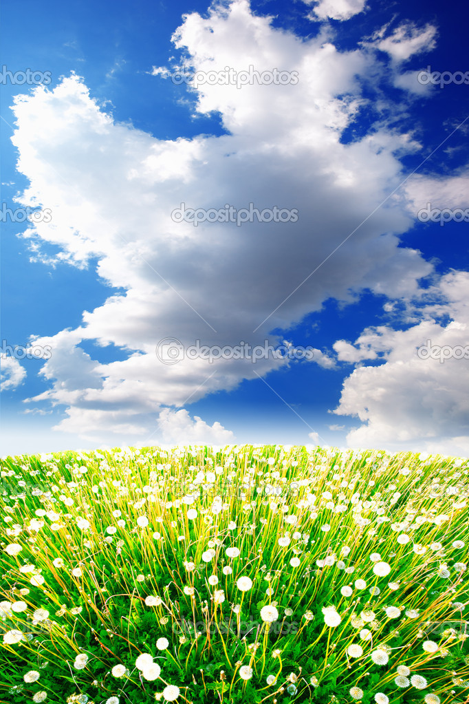 Dandelions on a summer solar meadow — Stock Photo #10954369