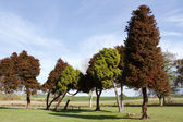 Group of trees in park — Stock Photo