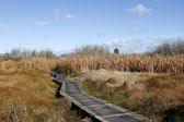Boardwalk in wetland — Stock Photo