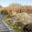 Boardwalk in wetland — Stock Photo #11050655