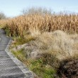 Boardwalk in wetland - Stock Photo