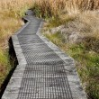 Boardwalk in wetland — Stock Photo #11050677