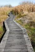 Boardwalk in wetland — Stock Photo