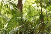 Tropical jungle — Stock Photo