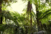 Tropical jungle forest — Stock Photo