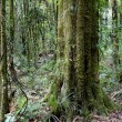 Tropical forest jungle - Stock Photo