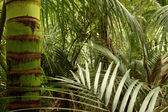 Tropical forest jungle — Stock Photo