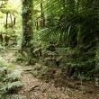 Tropical forest trail - Stock Photo