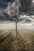 Dead tree and desert — Stock Photo