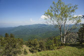 Madera de la montaña — Foto de Stock