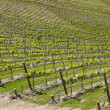 Vineyard from douro valley - Stock Photo
