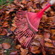 图库照片: Rake leaves. remove leaves. gardening