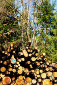 Firewood in a forest — Stock Photo