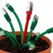 Cable network in flower pot - ストック写真