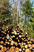 Dříví v lese — Stock fotografie