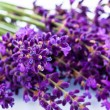 Lavender on a white background — Stock Photo