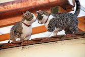 Due gatti sul tetto — Foto Stock