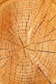 木の幹の年輪 — ストック写真
