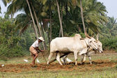 Indian agriculture — Stock Photo