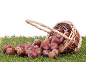 Wood nut in a basket — Stock Photo