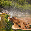 Geysers and hot springs are located in many places around Rotorua - Stock Photo