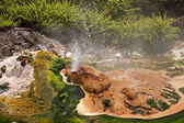 Geysers and hot springs are located in many places around Rotorua — Stock Photo