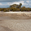 Hot bubbling mud in many places in Rotorua - Stock Photo