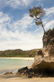 Lonely tree on a high coastal cliff — Stock Photo