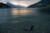 Evening view of the lake near Queenstown — Stock Photo