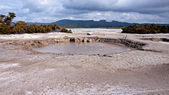 Hot bubbling mud in many places in Rotorua — Stock Photo