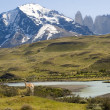 Stock Photo: Guanacos in Torres del Paine region live in freedom