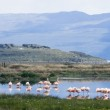 Above the lake you can meet patagonian pink flamingos — Stock Photo #11016724