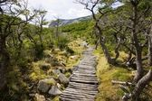 A typical trail in the region of Cerro Torre — Stock Photo