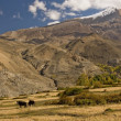 Stock Photo: Nepal - Annapurna