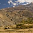 Nepal - Annapurna — Stock Photo #11023994